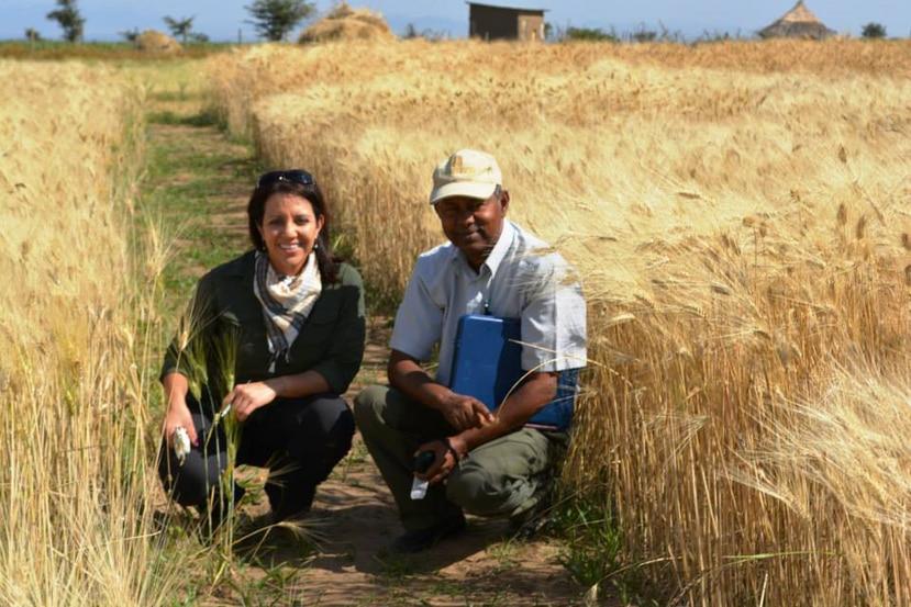 Etiopía es uno de los países donde la doctora en fitopatología (enfermedades de plantas), Maricelis Acevedo Román, ha trabajado e investigado. (Suministrada / Maricelis Román)