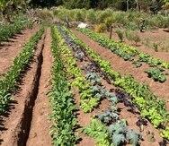 Diversas voces reclaman que los terrenos se mantengan protegidos para uso agrícola.