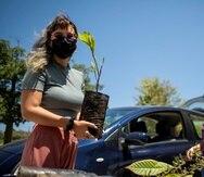Además de repartir los árboles se orientó a las personas cómo cuidar de ellos.
