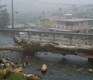 Imagen del árbol que cayó en la carretera PR-1, kilómetro 41.5, del barrio Beatriz, sector Las Abejas, en Caguas. (Suministrada)
