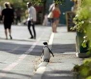 """En esta imagen difundida por Netflix, es una escena de la serie """"Penguin Town"""". (Netflix vía AP)"""