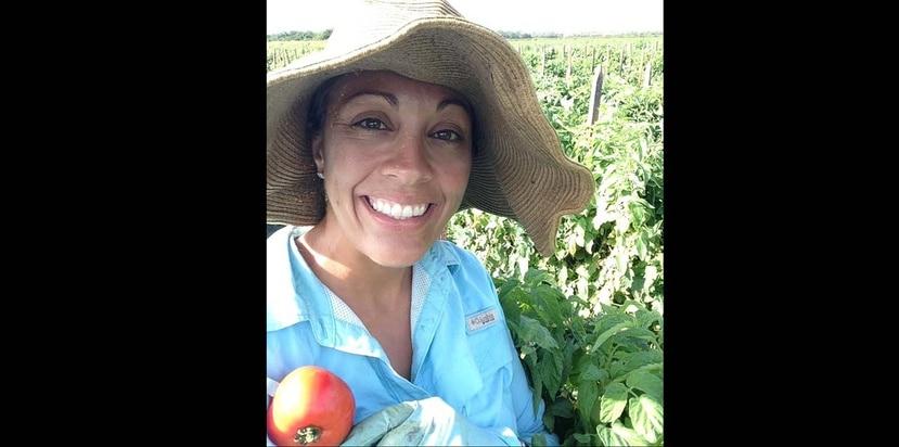 La agrónoma boricua Jasmine López Arvelo trabaja como investigadora evaluando híbridos de tomate en varios estados con el fin de encontrar una variedad casi ideal para cada tipo, que sea resistente a las enfermedades más prevalentes. (Suministrada)