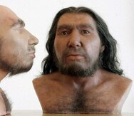 El primer encuentro entre los neandertales euroasiáticos y la nueva especie humana proveniente de África fue hace más de 130,000 años (EFE).
