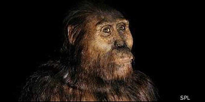 Es una especie diferente al Australopithecus afarensis, conocida como Lucy, que vivió entre hace 2.9 y 3.8 millones de años. (Science Photo Library / BBC)