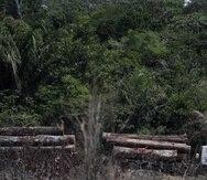 Vista de camión que transporta madera obtenida ilegalmente en la selva amazónica.