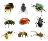 Los insectos están en peligro de extinción. (Shutterstock)