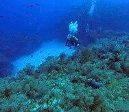 """Los investigadores dijeron que encontraron """"una diversidad increíble, sobre todo en términos de algas y esponjas y una salud increíble también dentro de esos arrecifes"""" en Cuba. (AP / Chris Gillette)"""