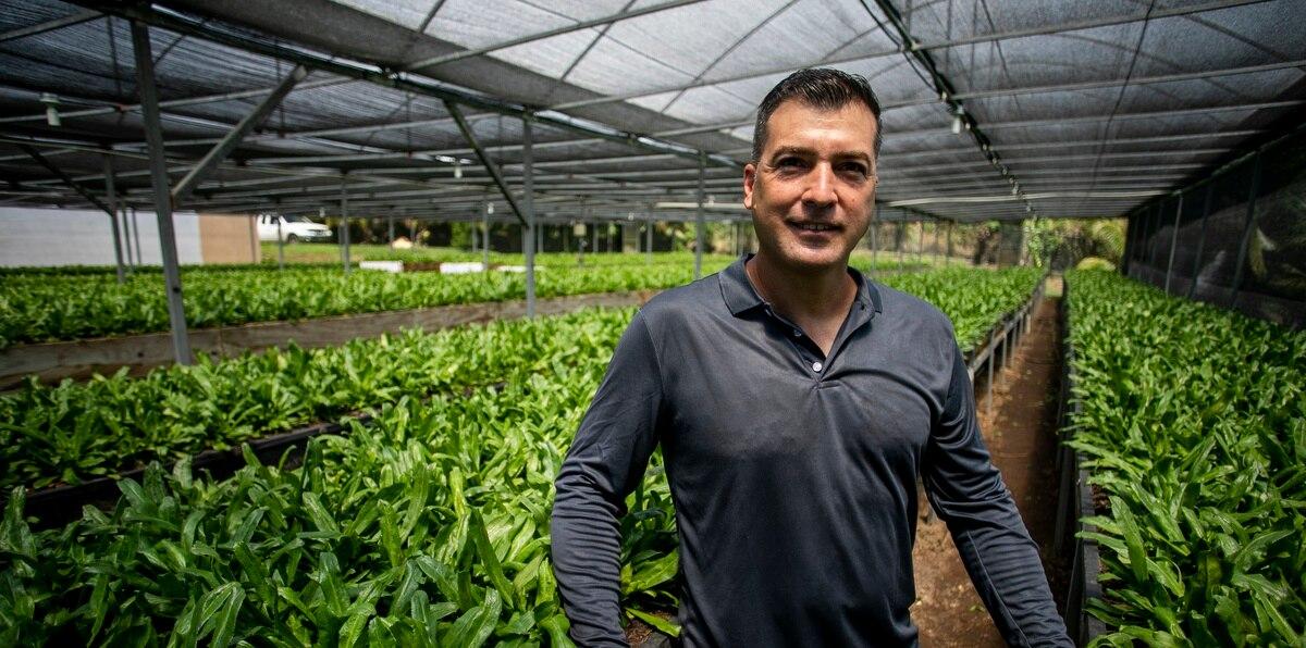 De Moca a las cocinas boricuas: recao largo de Morales Farm