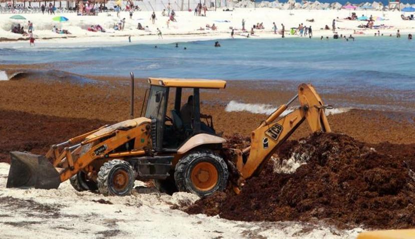 Fotografía que muestra una playa invadida por el sargazo en el estado de Quintana Roo, México (EFE).