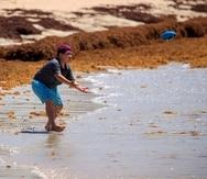Un joven juega en playa Playuela, en Cabo Rojo, donde el sargazo ha poblado su costa.
