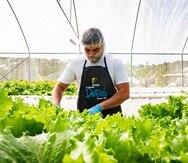 World Central Kitchen abrirá una nueva convocatoria para el programa Plow to Plate en septiembre del 2020. (Suministrada)