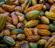 En la hacienda Jeanmarie Chocolat, en Aguada, se cosecha un cacao fino y aromático con el que se producen una variedad de productos que pueden adquirirse allí y que ya comienzan a exportarse.    Xavier Garcia / Fotoperiodista