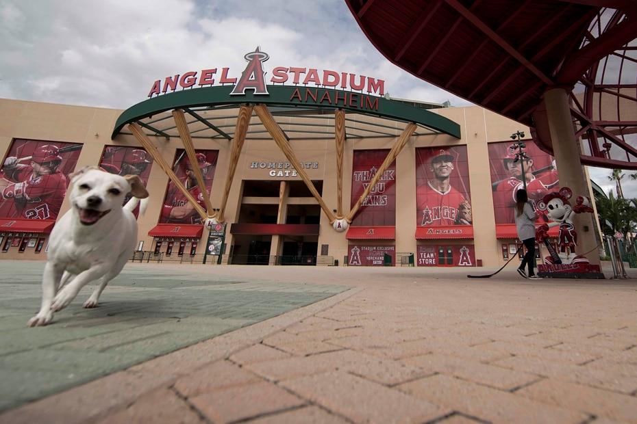 La norma los días de juego es ver grandes cantidades de personas circulando por los estadios desde temprano. En la foto un perro por los predios del Angel Stadium, hogar de los Angels de Los Ángeles. (AP/Chris Carlson)