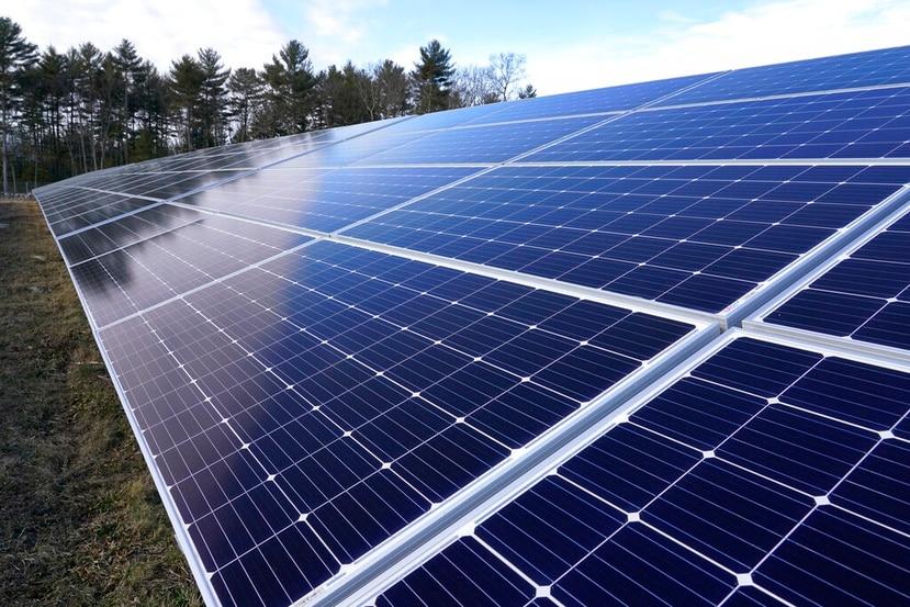 Varios paneles solares.