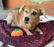 """Perros y gatos """"seniors""""  del Santuario de Animales San Francisco de Asís buscan un nuevo hogar"""