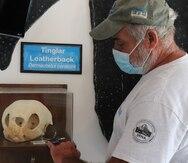Amigos de las Tortugas Marinas: 20 años de labor incesante