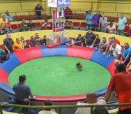 Jueces apelativos levantan preguntas al gobierno federal sobre prohibición de gallos en Puerto Rico