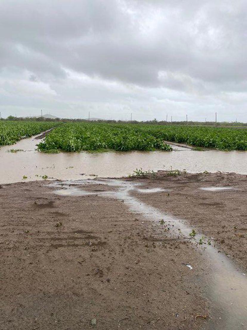 Aunque las lluvias asociadas a la tormenta Laura se percibieron en varias regiones, el viento sostenido del fenómeno afectó más a fincas ubicadas en el área sur.