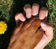 José R. Pagán espera ayudar a que otros guardianes de perros entiendan lo que es el proceso de eutanasia y cuándo es realmente necesario ponerlo en práctica.