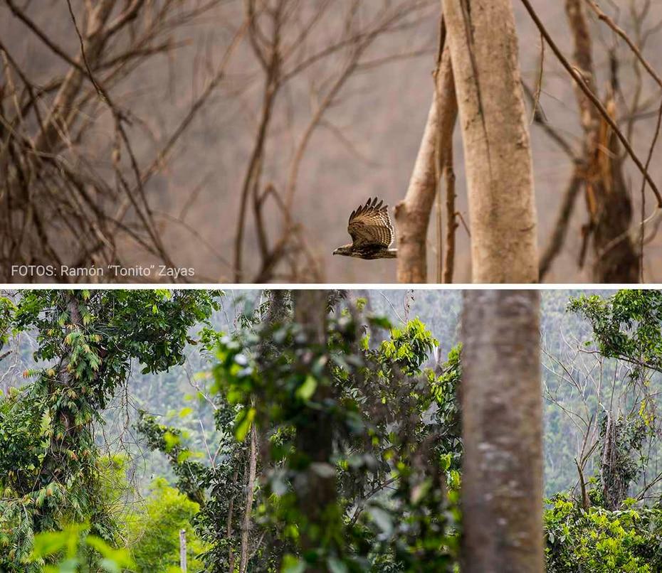 En la foto, un año después, se muestra el lugar exacto donde volaba un guaraguao en Río Grande a escasos días del embate del huracán.