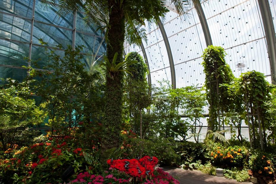 Además de tener la apariencia de un centro comercial de lujo, el aeropuerto de Changi (SIN), en Singapur, cuenta con un extenso jardín de mariposas en su interior.