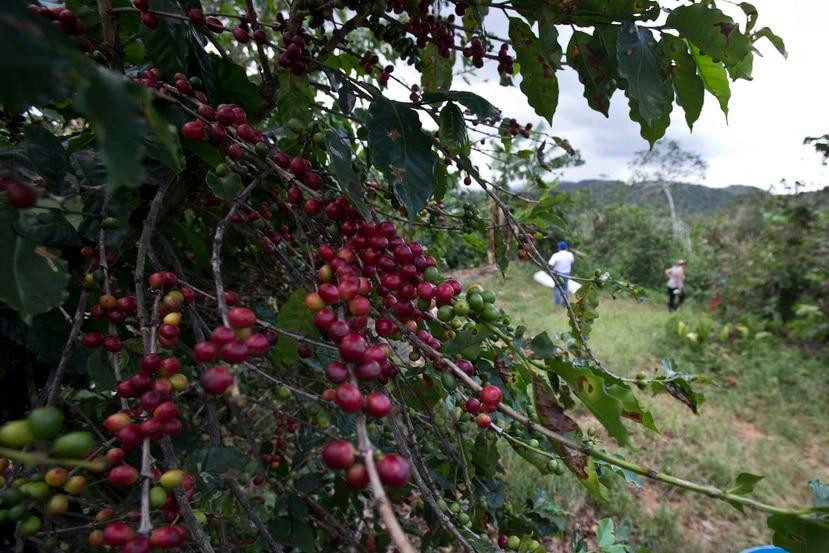 El acuerdo busca producir tres millones de árboles por año. (Archivo/GFRMedia)