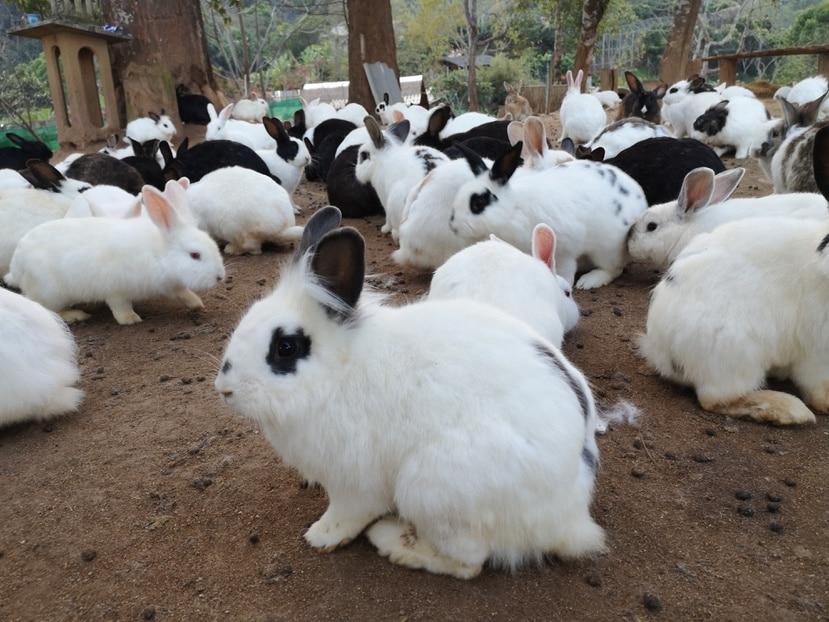 Varios conejos en una finca.