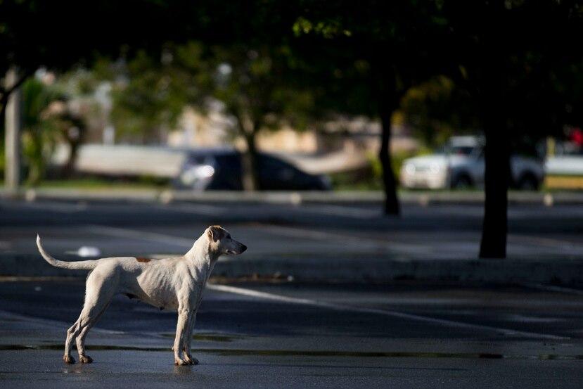 Las garrapatas provocan la enfermedad de lyme en perros y humanos. (Archivo / GFR Media)