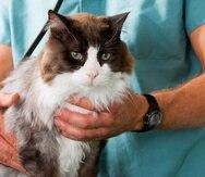 A los gatos no suele gustarle las visitas al veterinario y se asustan fácilmente.