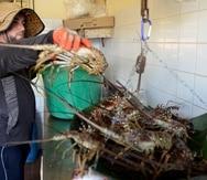 Diferentes voces de pescadores depusieron ayer ante la Asamblea Legislativa para exigir que se les otorgue el monto justo para el sector. (GFR Media)