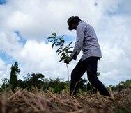 La organización Para la Naturaleza repartirá gratis 10,000 árboles