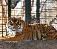 Sale de cuidado intensivo la víctima de un ataque de tigre en Kansas