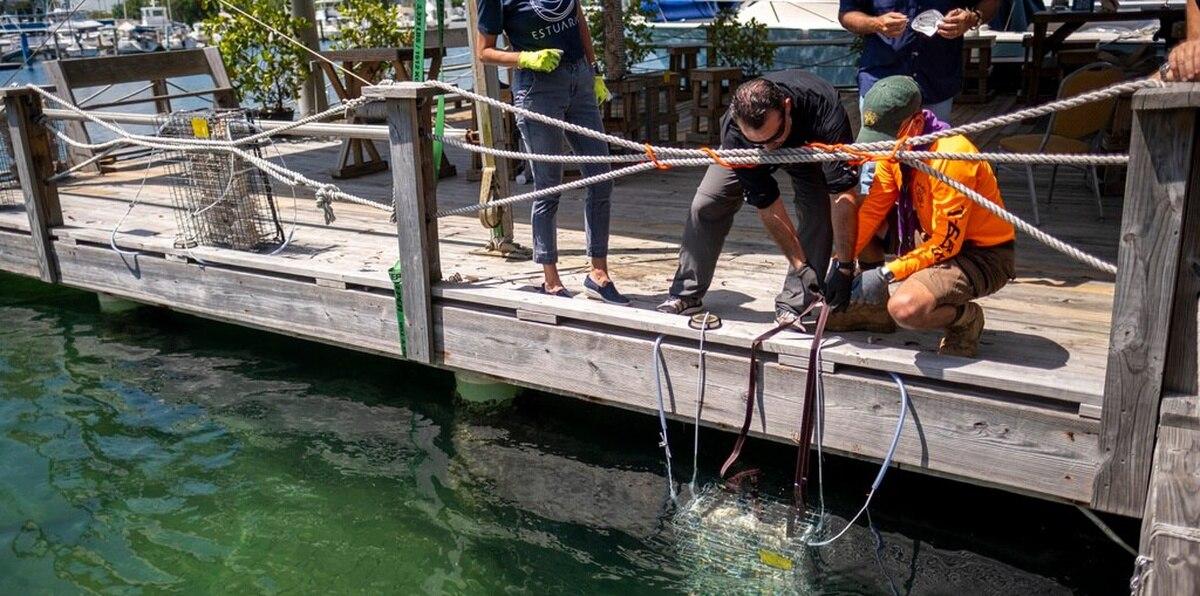 Los BioHUTS no llegan al fondo para evitar que se afecten las yerbas marinas y otras especies.