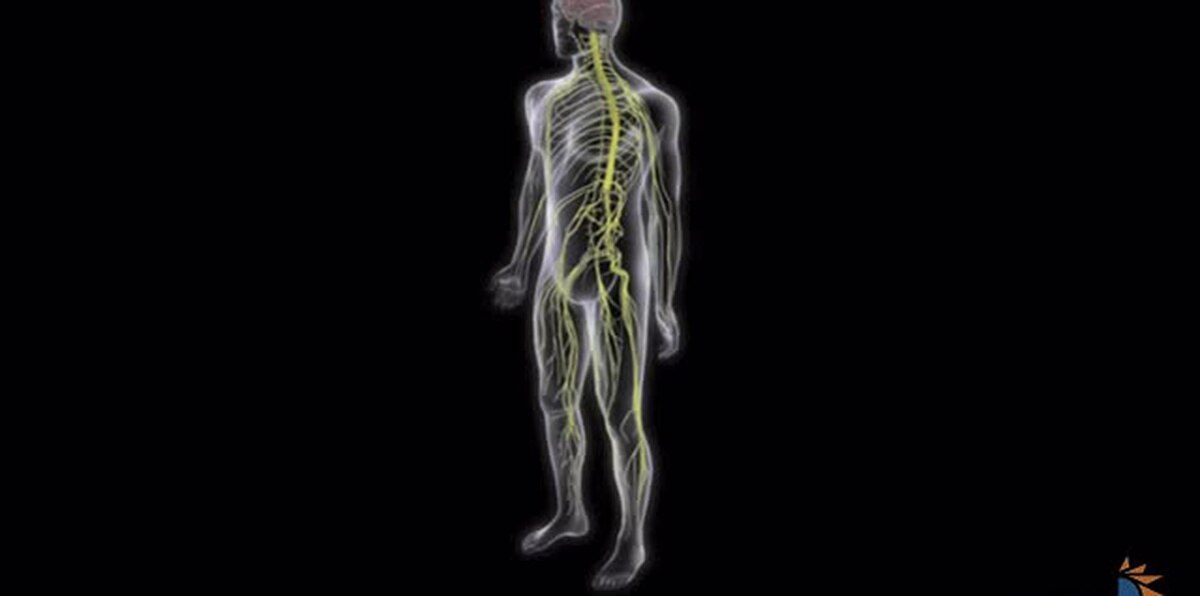 ¿Qué es el síndrome de Guillain-Barré?