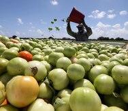 Departamento del Trabajo detalla cómo patronos agrícolas pueden beneficiarse de mano de obra extranjera