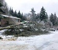 Varias personas pasan por un árbol caído en Lake Oswego, Oregon, el sábado 13 de febrero de 20021, debido a una tormenta que cubrió de hielo y nieve la zona,