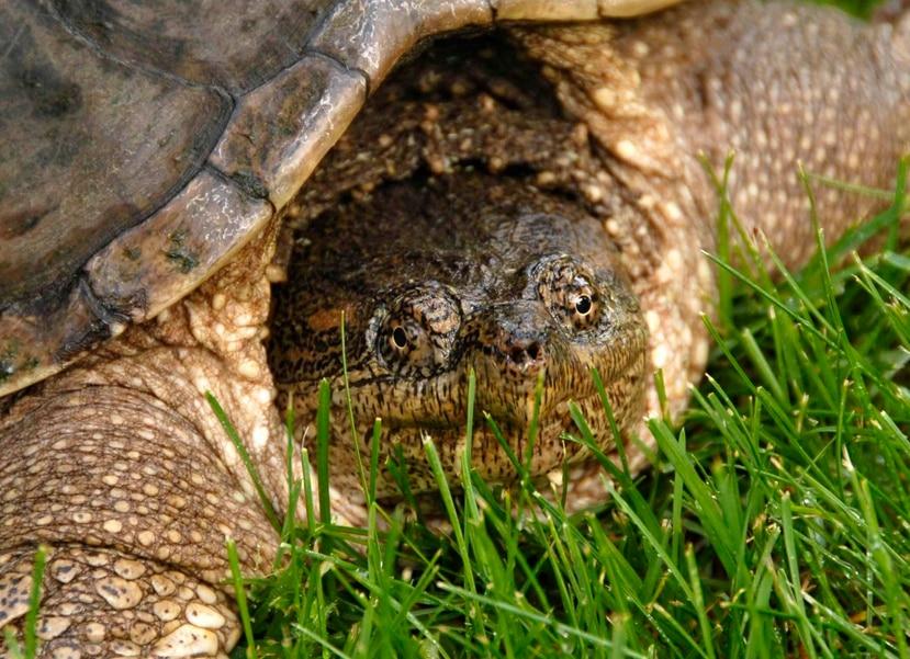Se trata de uno de los hallazgos más antiguos de huellas de tortuga conocidos, y también el más abundante en cuanto a registros de fósiles de este grupo en materiales del Triásico en el mundo. (Archivo)