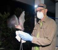 Detectan cientos de nuevos coronavirus en murciélagos en China