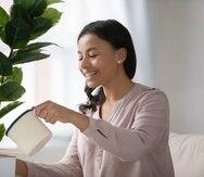 La ventaja de las plantas interiores es que no solo embellecen el ambiente y brindan una manera de entretenerse dándoles cuidado, sino que también promover la salud física y emocional.