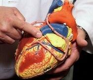 El nuevo conocimiento molecular y celular del corazón promete permitir una mejor comprensión de las enfermedades cardíacas y guiar el desarrollo de tratamientos altamente individualizados.