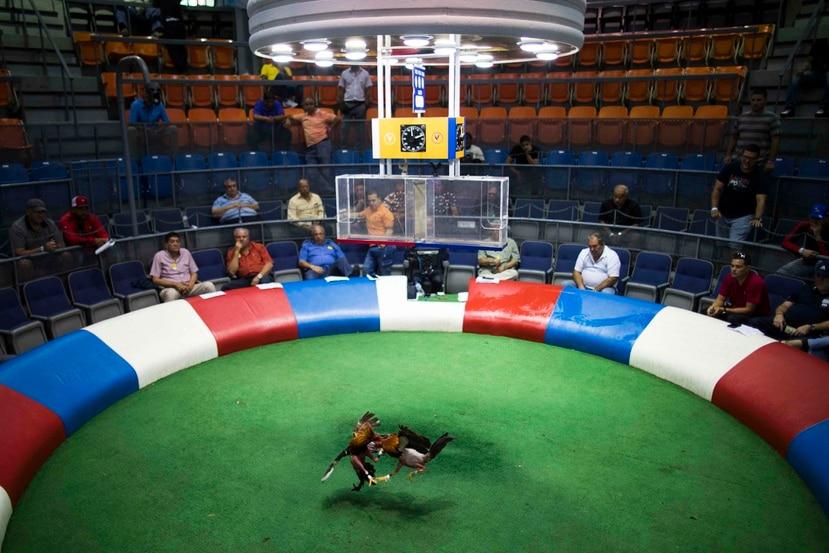 La historia de las peleas de gallos en la isla data desde el siglo XVI. En la foto, un combate realizado en el Club Gallístico de Isla Verde.