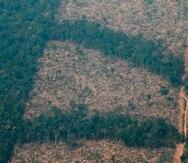 Vista aérea de áreas deforestadas de la selva amazónica de Porto Velho, Rondonia (Brasil) con el lado derecho calcinado por los incendios.