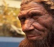 Representación de un neandertal expuesto en el Museo de Historia Natural de Londres. (EFE)