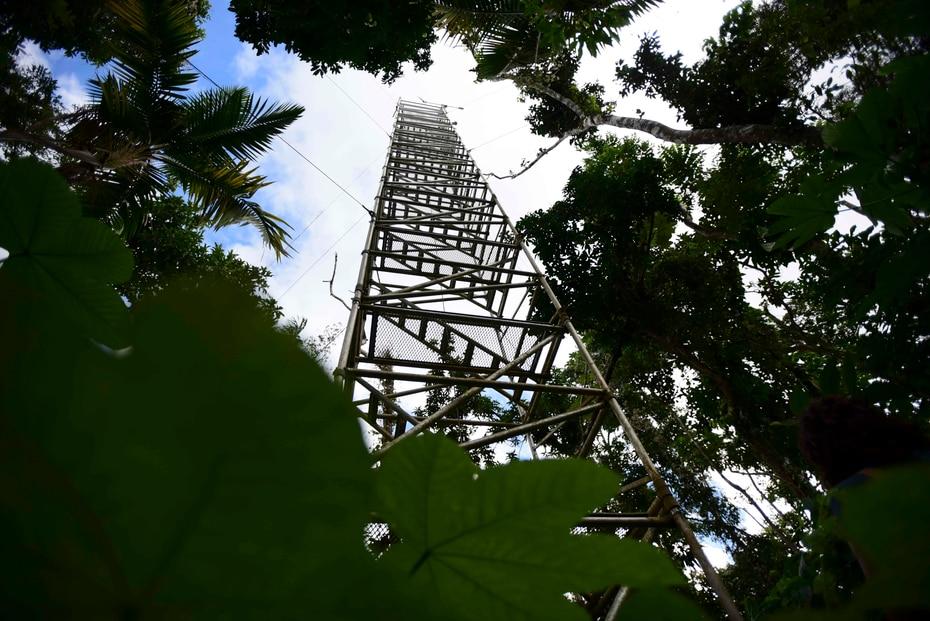 Una torre que permite supervisar parte de El Yunque, en Río Grande.