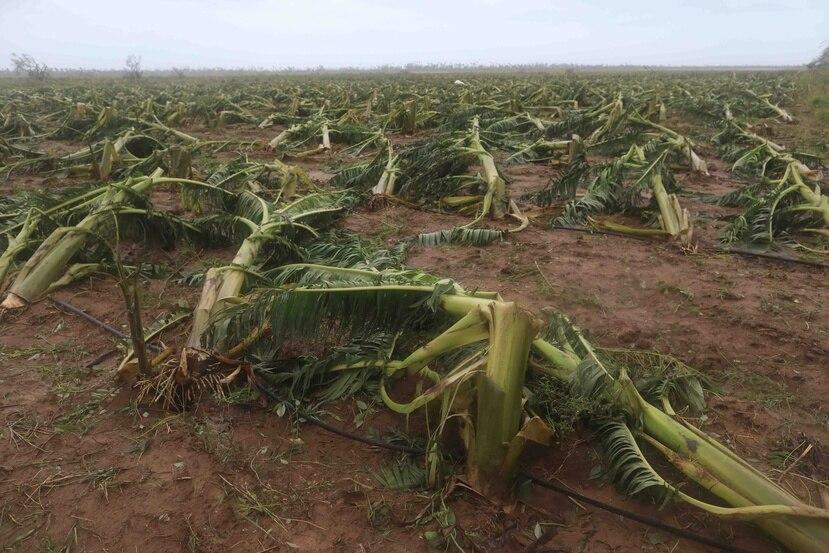 El sector agrícola en Puerto Rico experimentó una pérdida de unos $740 millones.