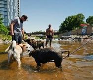 Unos perros juegan en el agua de la confluencia del río South Platte y del Cherry Creek en Denver.