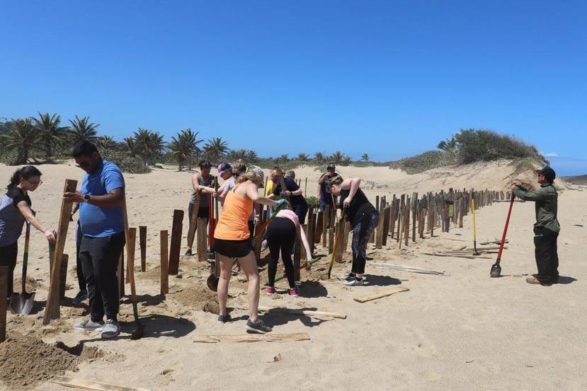 La UPR en Aguadilla lidera una iniciativa de restauración de dunas en las costa norte de Puerto Rico. El proyecto es subvencionado con fondos federales y lo dirige el doctor Robert J. Mayer. (Suministrada)