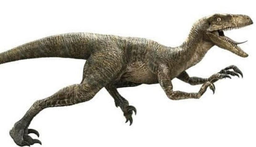 Si un velociraptor viviera hoy, parecería un ave un poco extraña y no el dinosaurio que aparece en Jurassic Park. (Twitter/@PsyJotics)