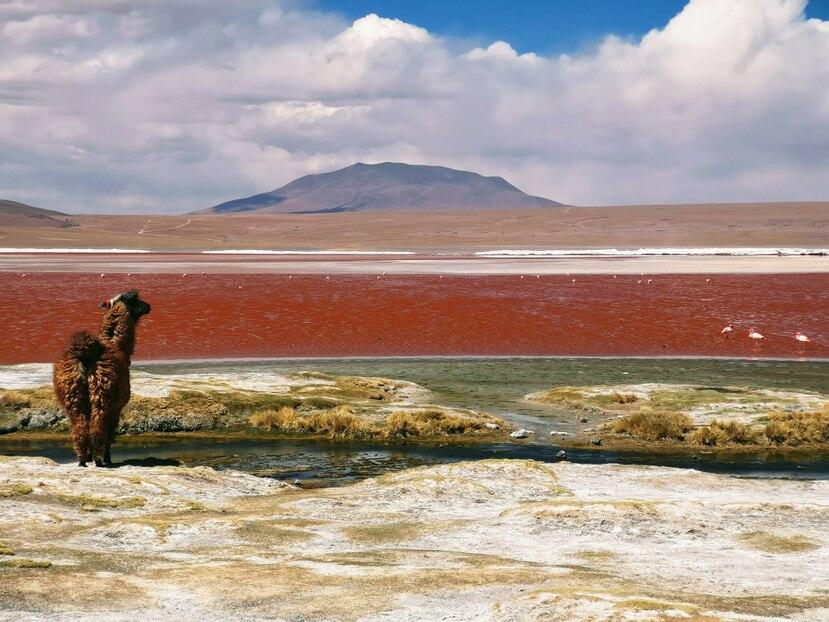 """Los pasajeros que viajen a Bolivia deben presentar una prueba negativa de COVID-19 """"de no más de siete días"""" de antigüedad antes de embarcar. (Unsplash)"""
