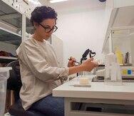 Científica boricua analiza el comportamiento de las arañas y su apareamiento